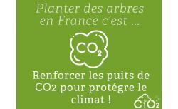 Capter le CO2 émis par votre serveur en plantant 18 arbres - OVHcloud Marketplace